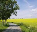 Potenzial und Grenzen der Bioenergie