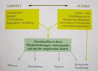 Humanökologisch-medizinische Forschung